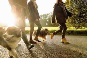Bienestar familiar: sal a caminar después de la cena