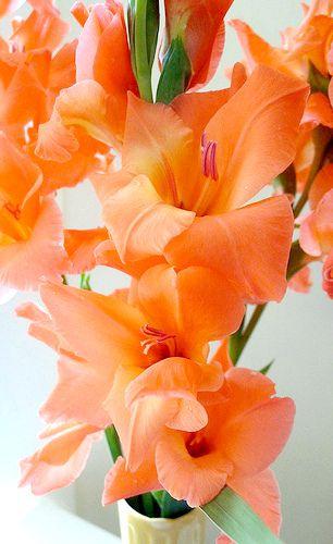 Bellísimas Flores Para Boda Disponibles Todo Año