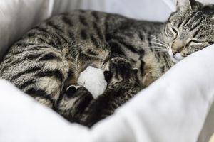 mama y gatitos