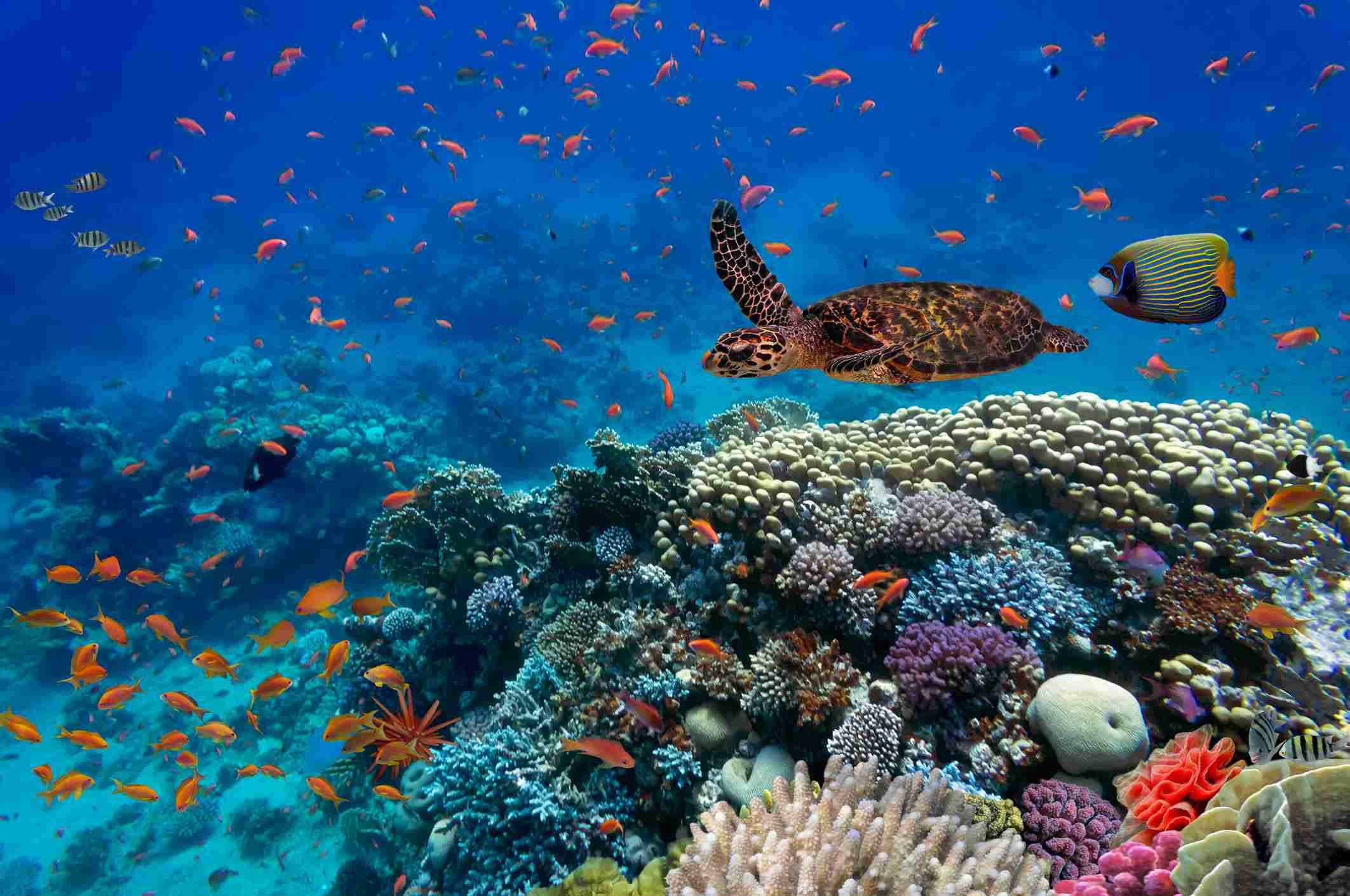 Arrecife de coral con peces y una tortuga
