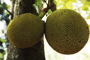 Frutapan