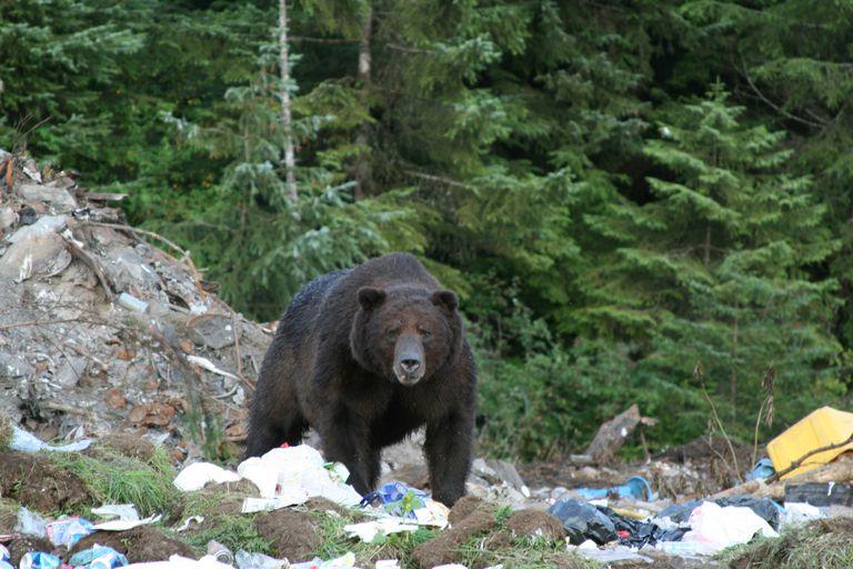 El mal manejo de la basura es una fuente de la contaminación del suelo.