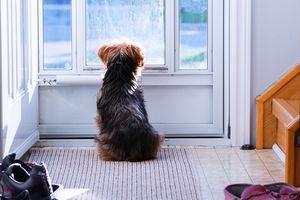Perro mirando afuera