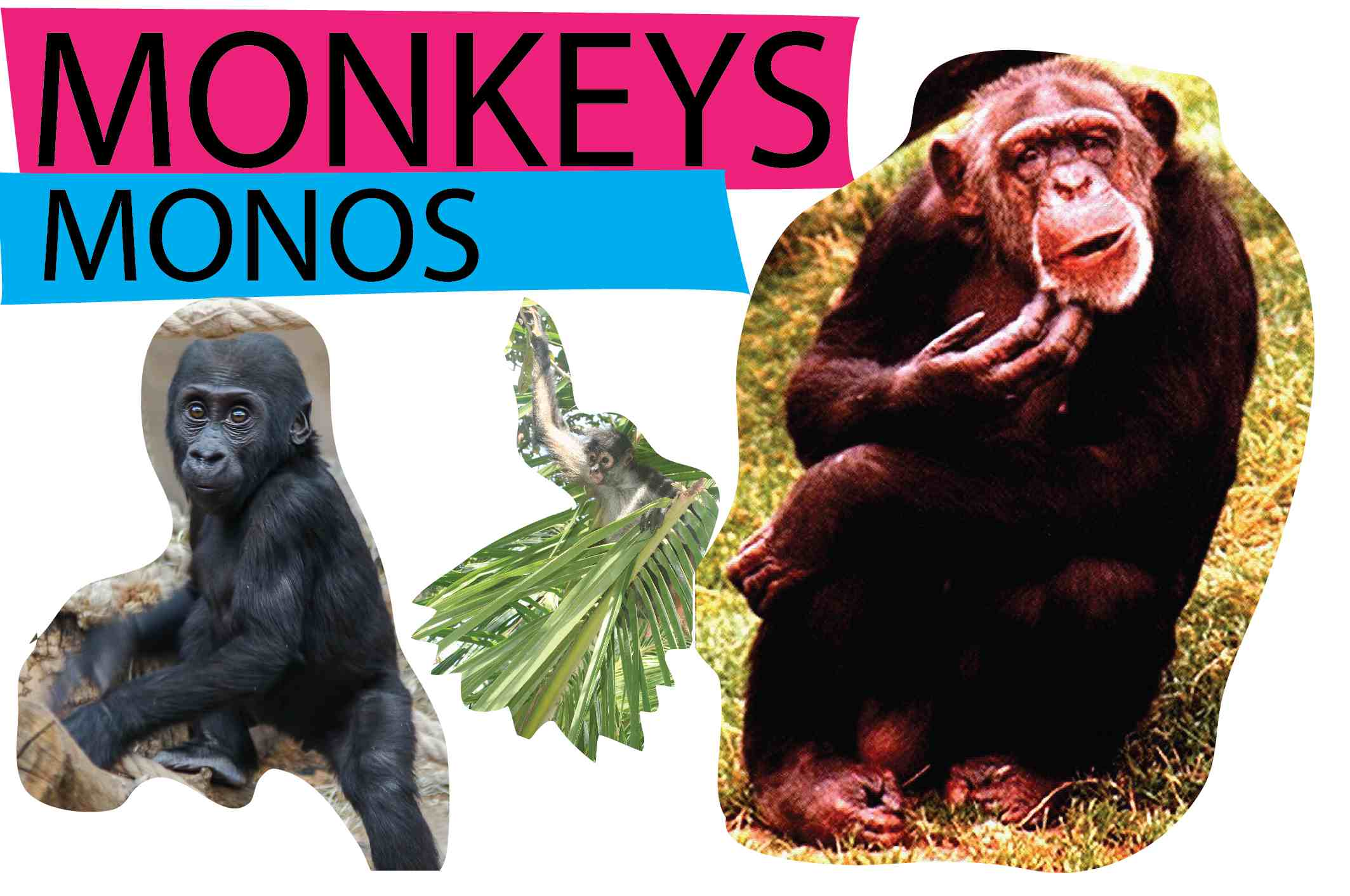 monkeys-11.jpg