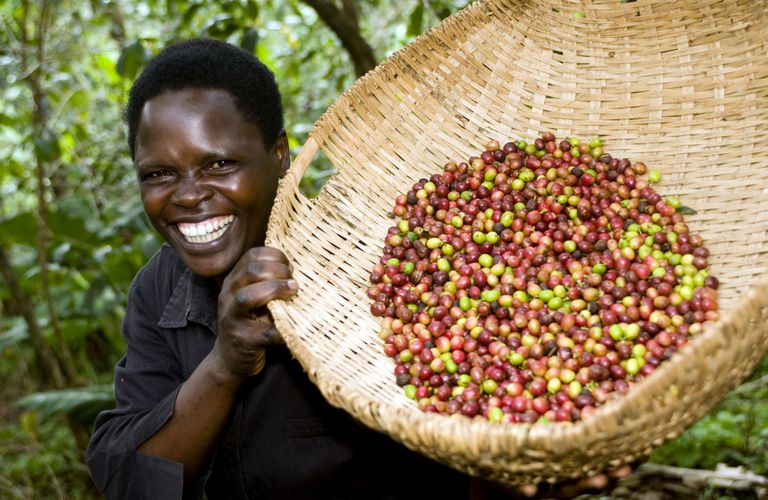 Café orgánico de comercio justo