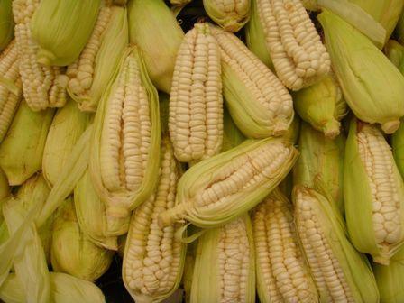 El maíz peruano