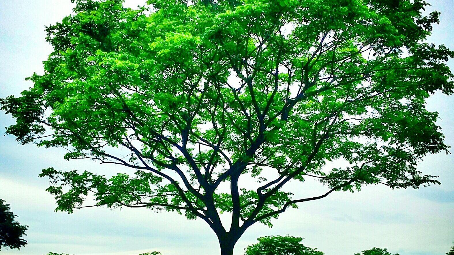 Los 10 Tipos De Plantas Más Comunes