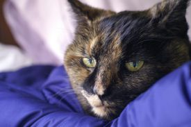 Un gato viejo y enfermo