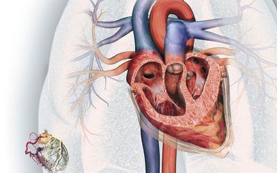 Circuito Circulatorio : Sistema circulatorio pulmonar
