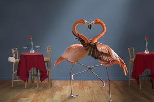Flamencos que forman la forma de corazón con el cuello en un restaurante