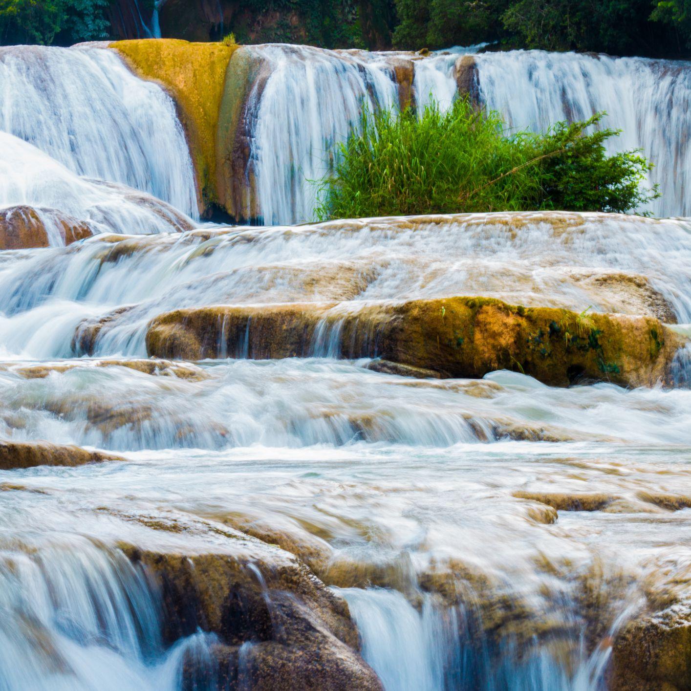 Por Que Los Seres Vivos Necesitamos El Agua
