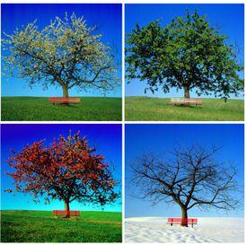 Las 4 estaciones del año