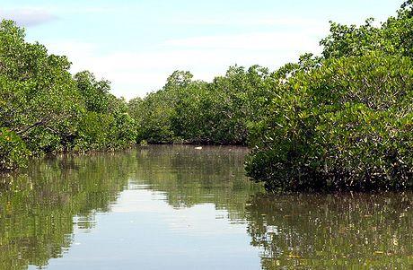 manglares-_.jpg