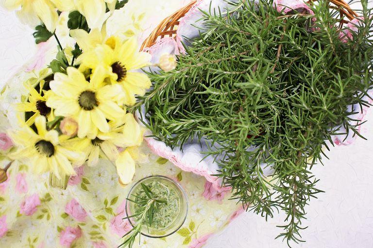 Romero, planta medicinal con altas propiedades