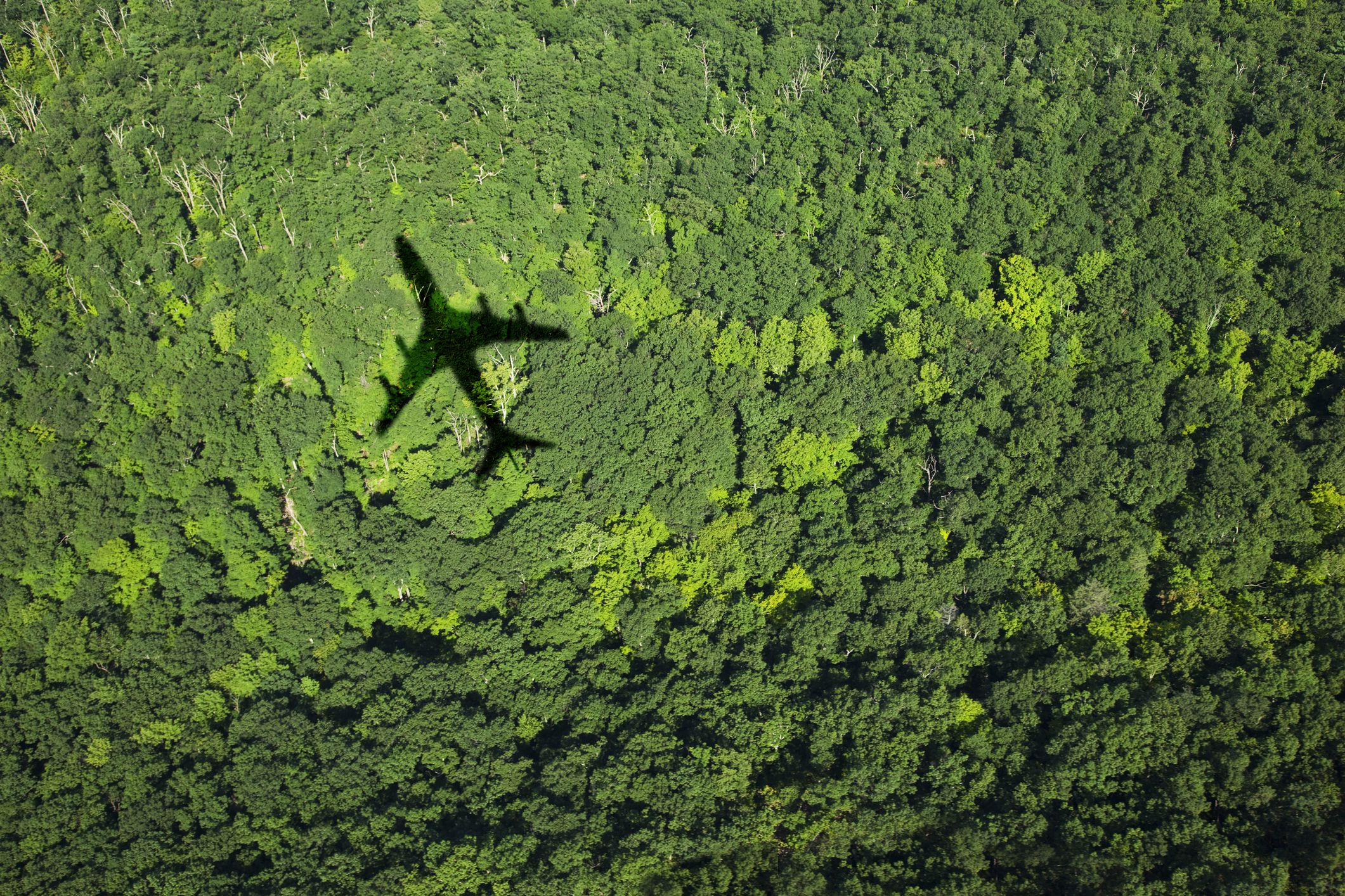 Shadow of airplane over forest