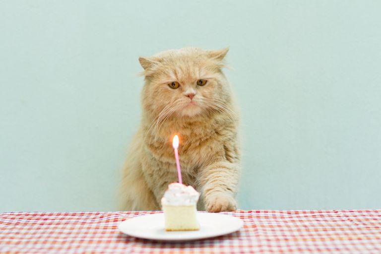 Frases Divertidas Para Decir Feliz Cumpleaños