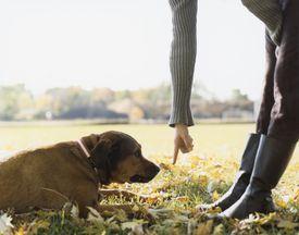 Una mujer le da una orden a su perro
