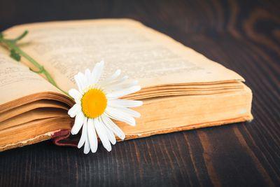 25 Frases De Amor Celebres