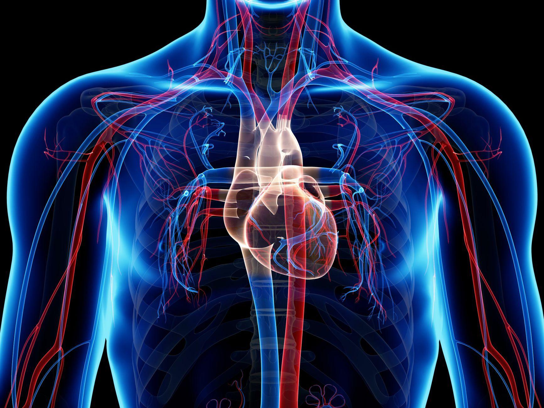 tipos de venas y arterias del cuerpo humano