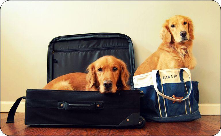 Cachorros listos para vacaciones