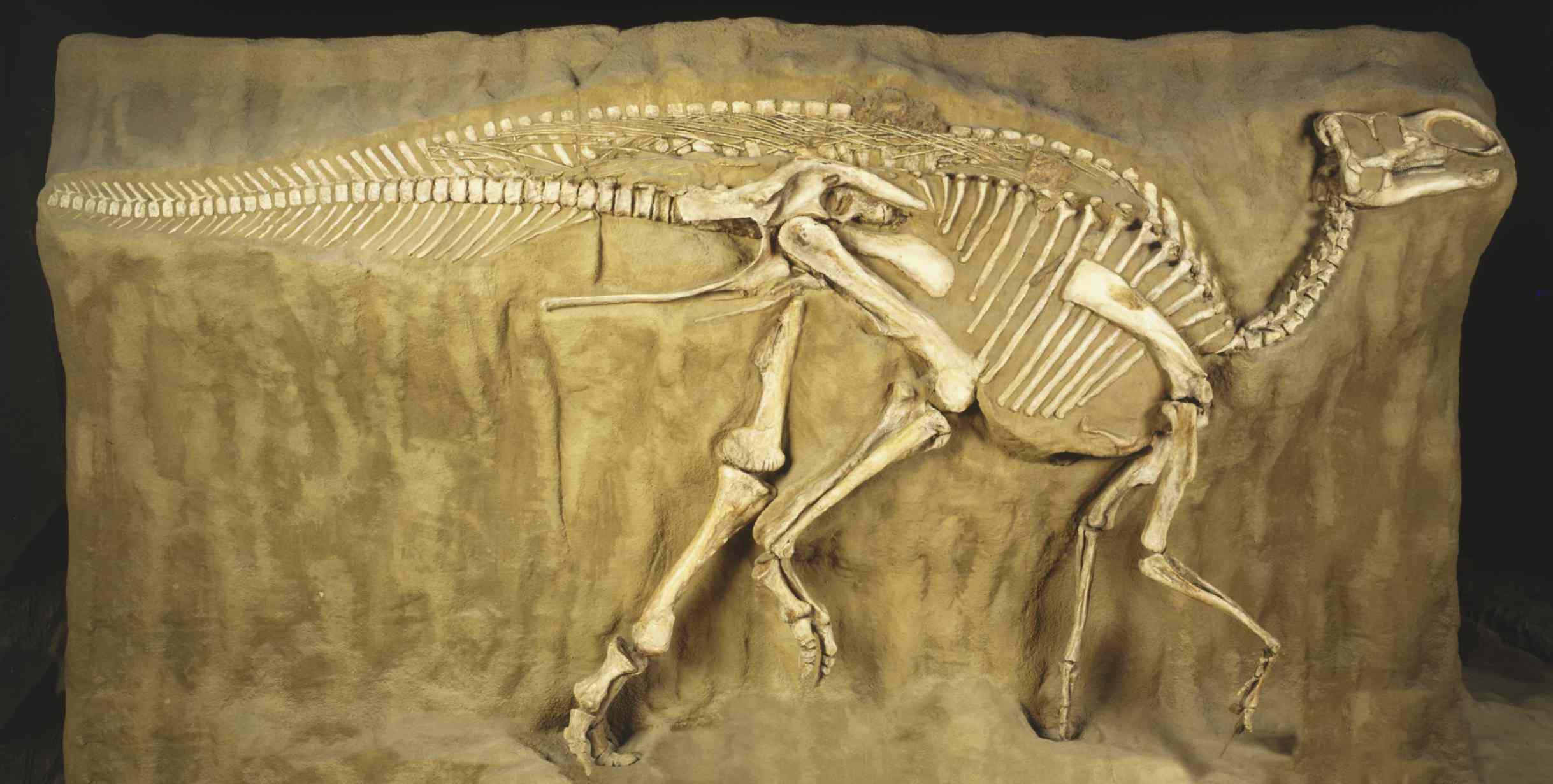 EEsqueleto de dinosaurio fosilizadol registro fosil