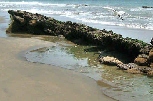Playa_Las_Pocitas.jpg