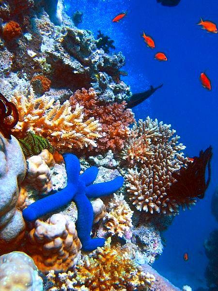 Arrecifes de Espíritu Santo