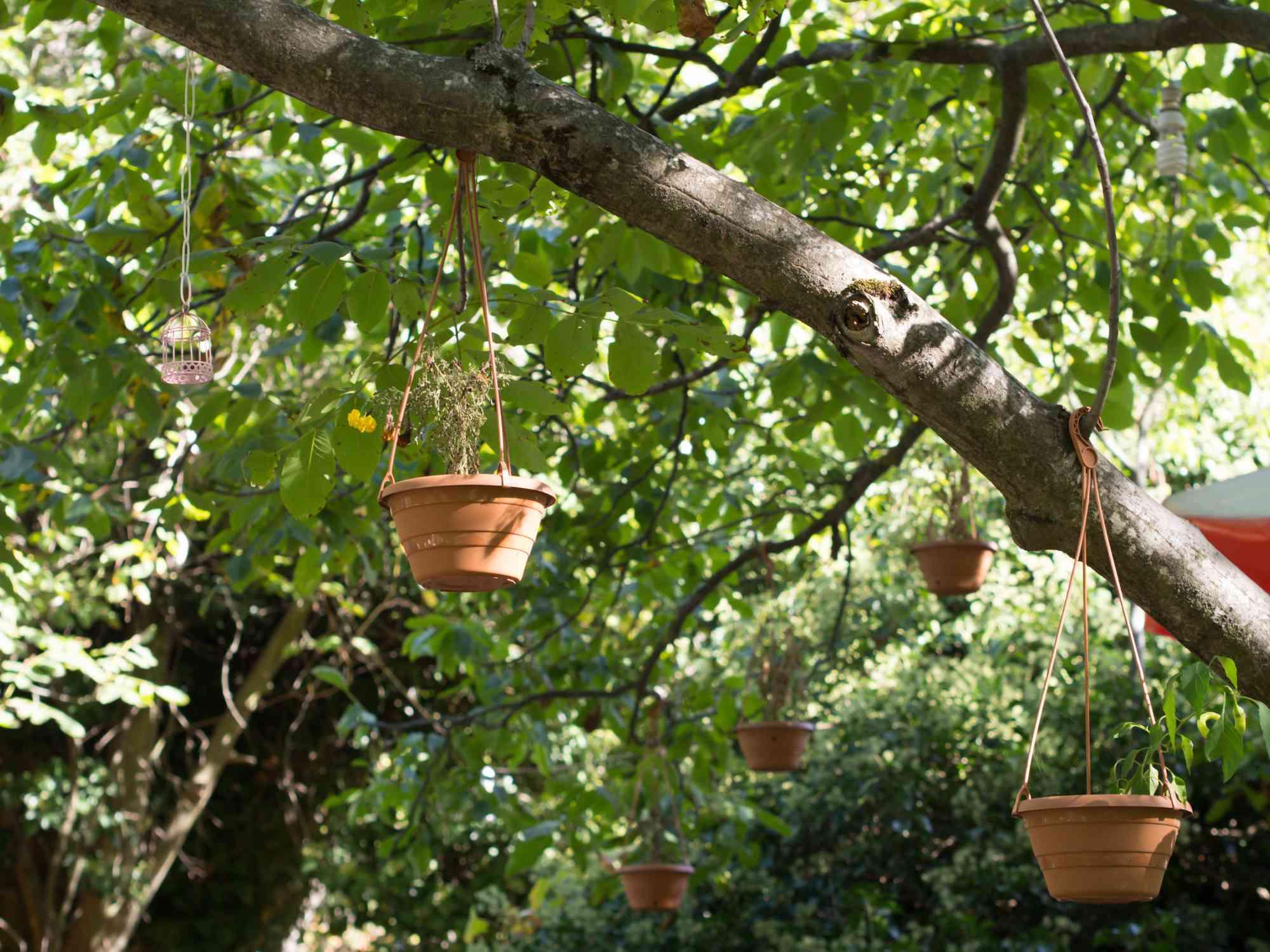 Plantas colgando de arbol