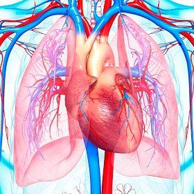 hipertension pulmonar, pulmones, arteria pulmonar,corazon