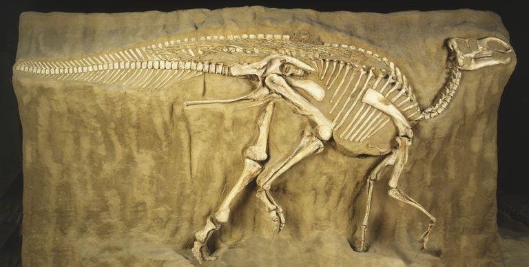 El registro fosil
