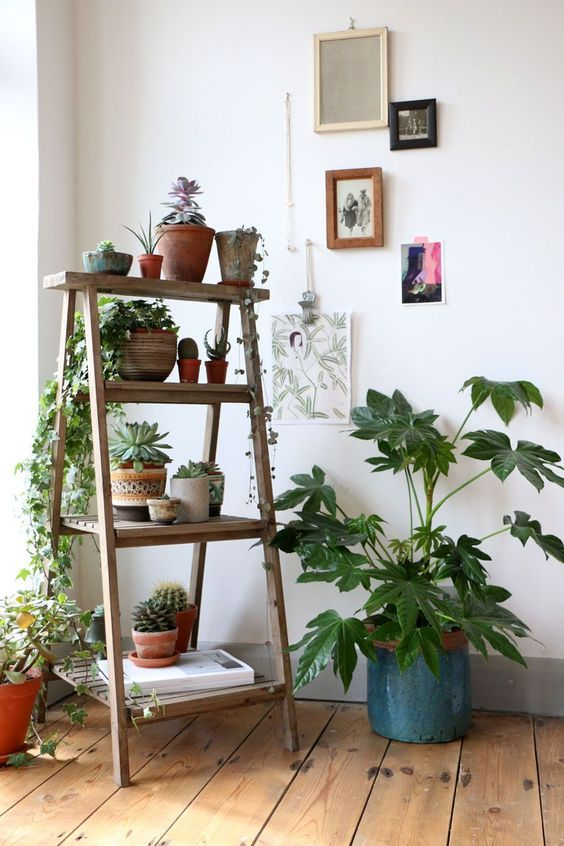 Plantas decoración