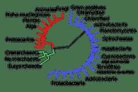 Los 3 dominios de la vida