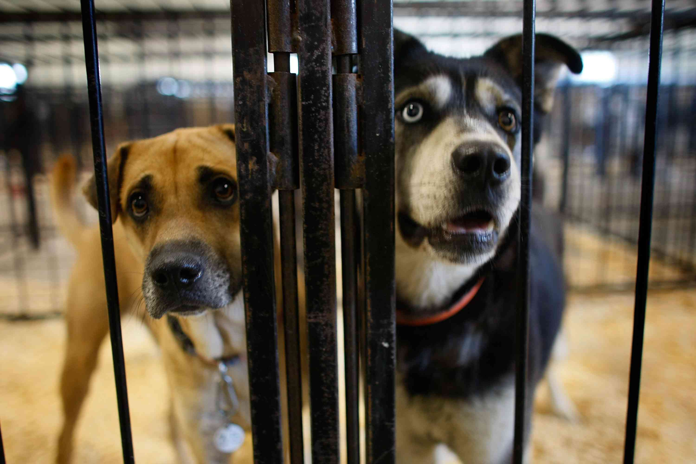 Dos perros están en una jaula en un refugio de animales