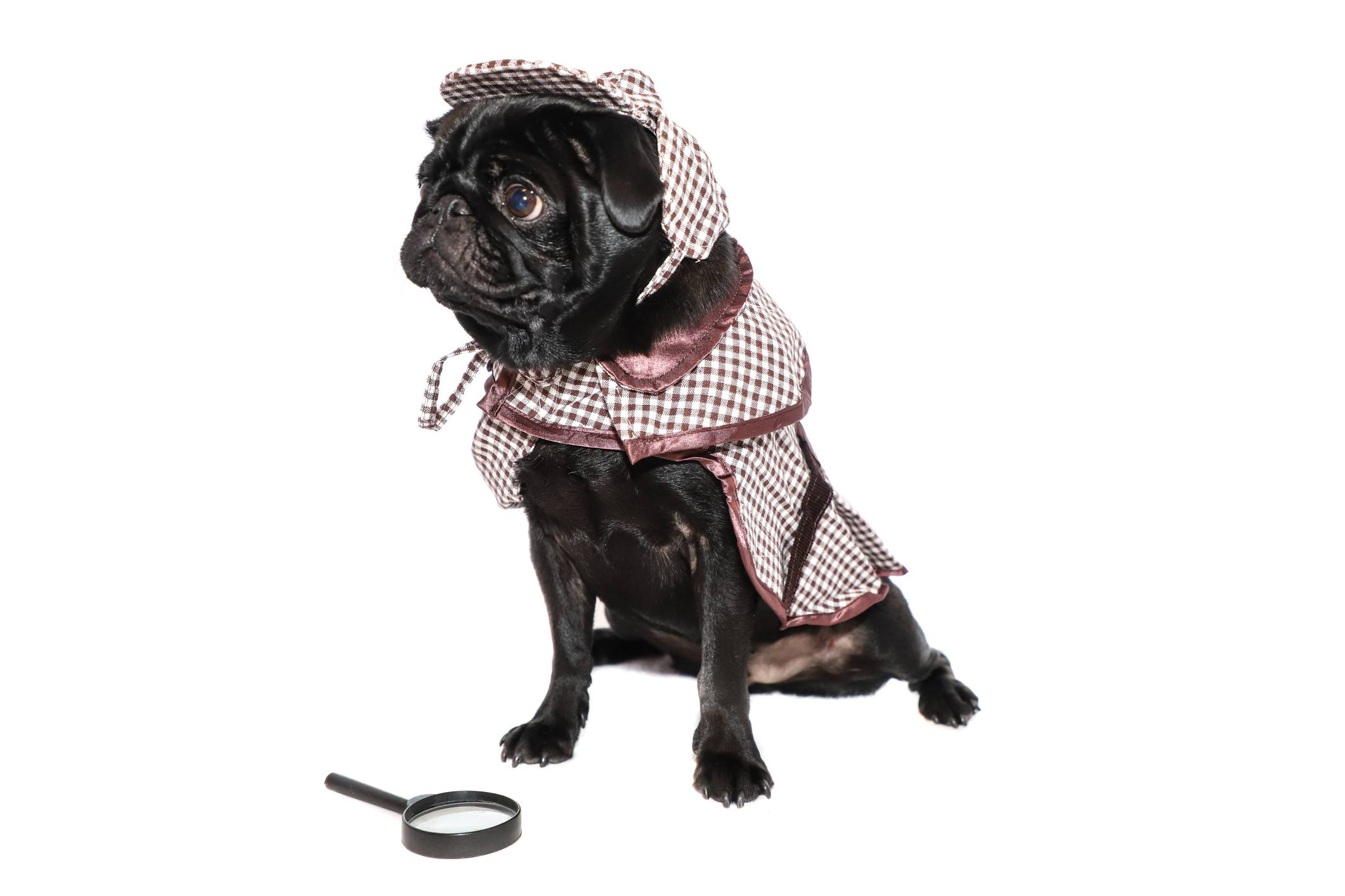 Perro en traje de detective