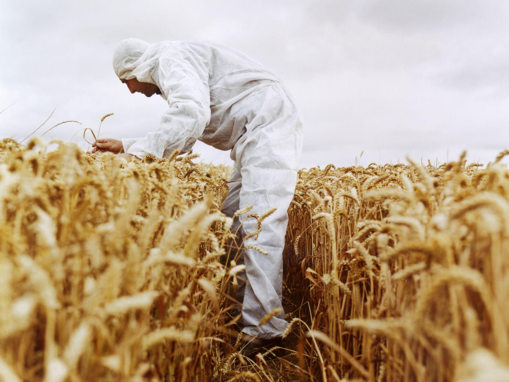 Alimentos transgénicos y el medio ambiente