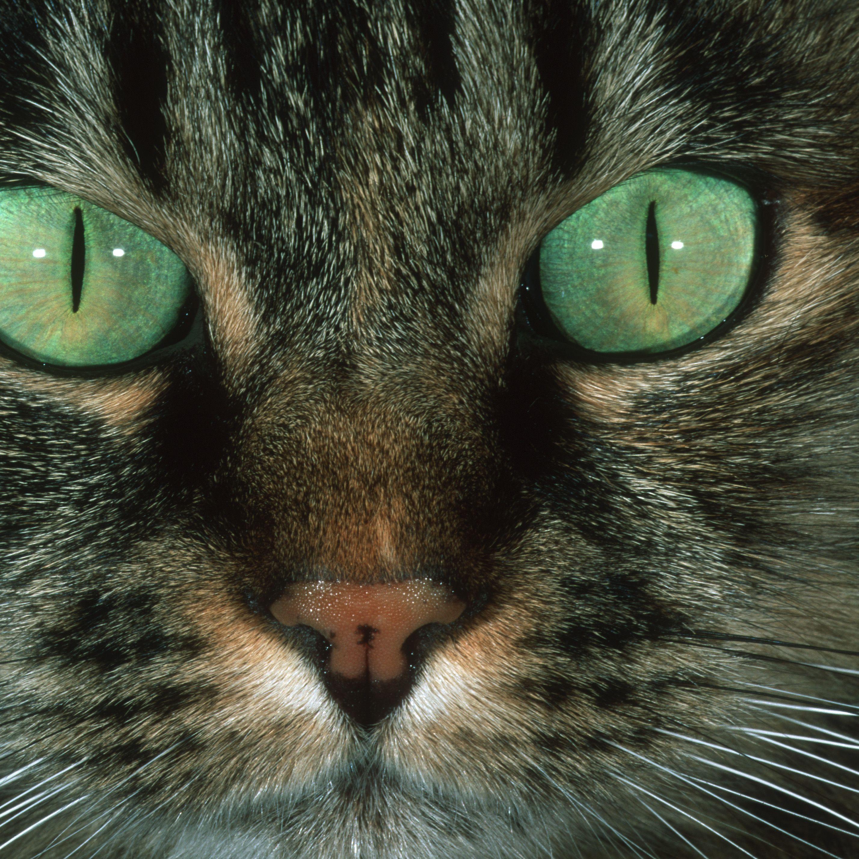 ¿Cómo se contrae la infección del ojo rosado?