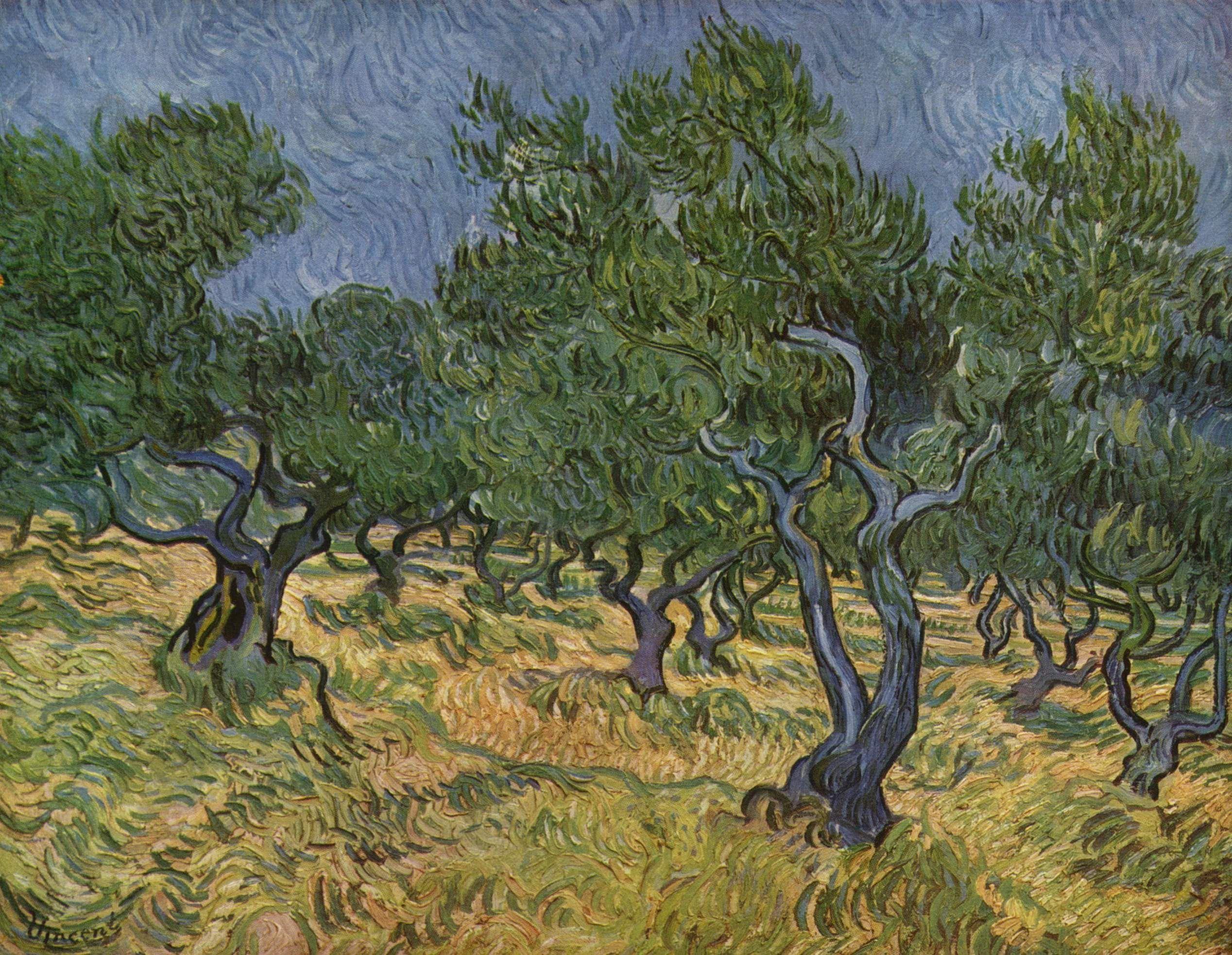 Vincent van Gogh, Olivos
