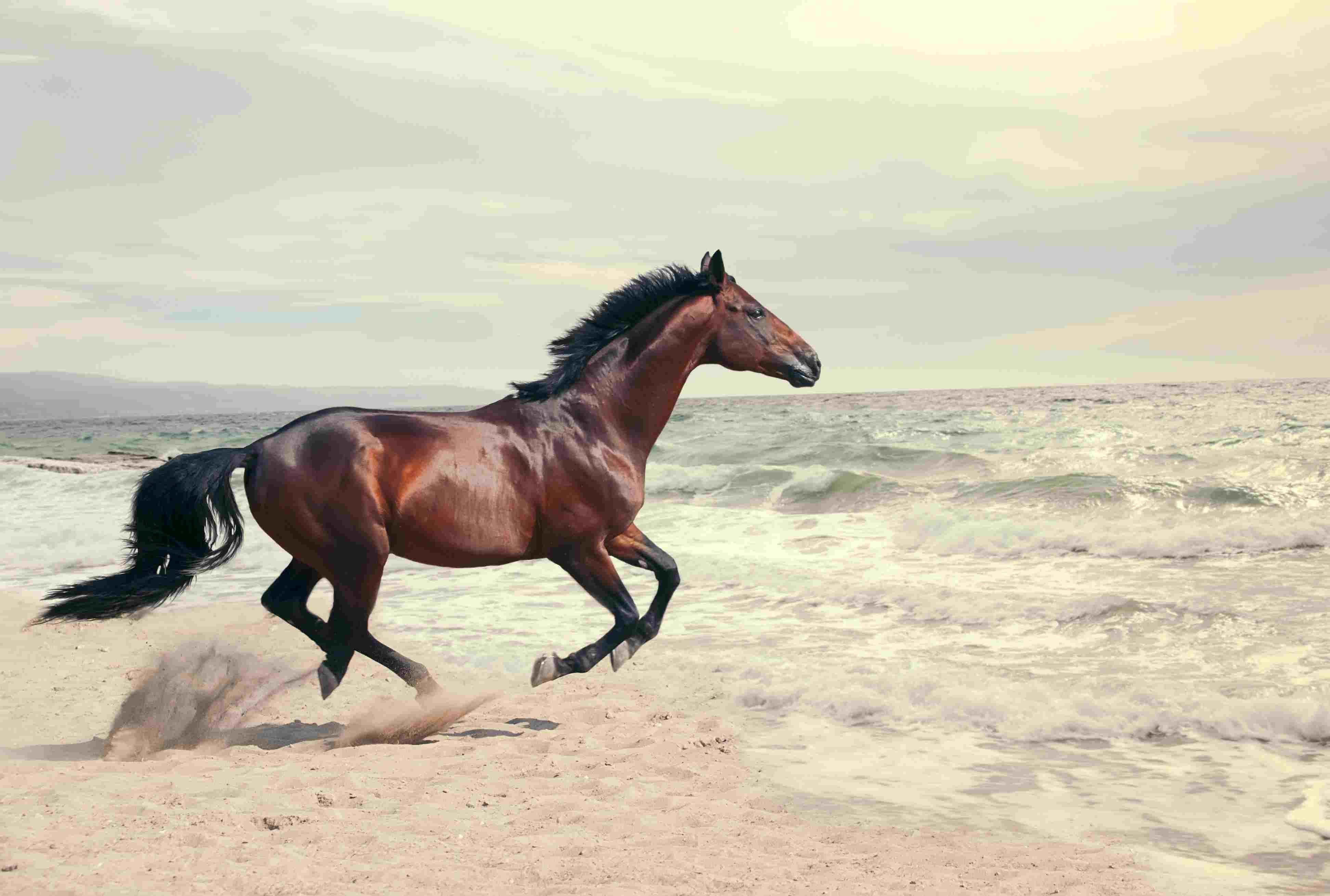 Caballo corriendo en la playa