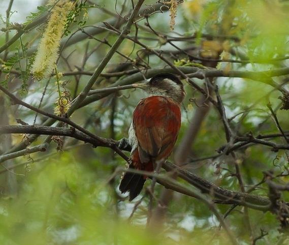 manglares-de-tumbes_.jpg