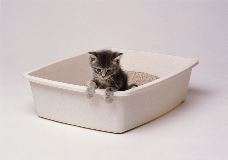Un gatito en una caja de arena
