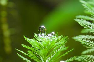 Burbuja de oxígeno de una planta acuática