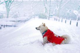 Dog enjoying snow