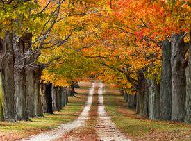 Árboles coloridos en el otoño