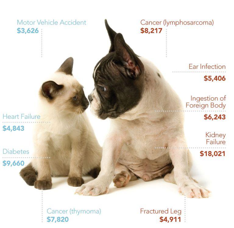 Ser dueño de perro no sale nada barato.