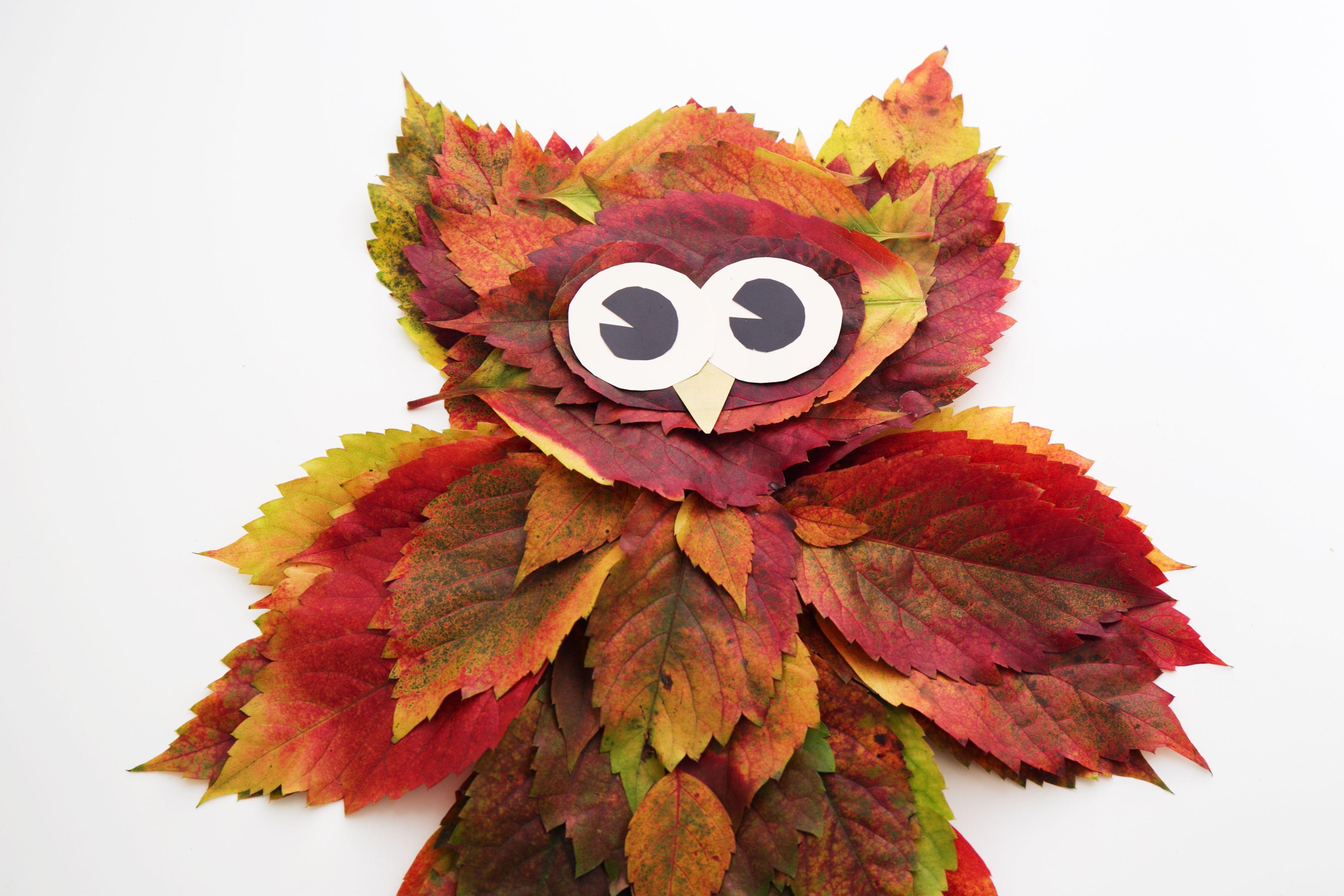 Búho con hojas secas