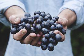 I will take those grapes (Yo me llevaré esas uvas)