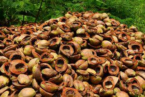 Cascara de coco