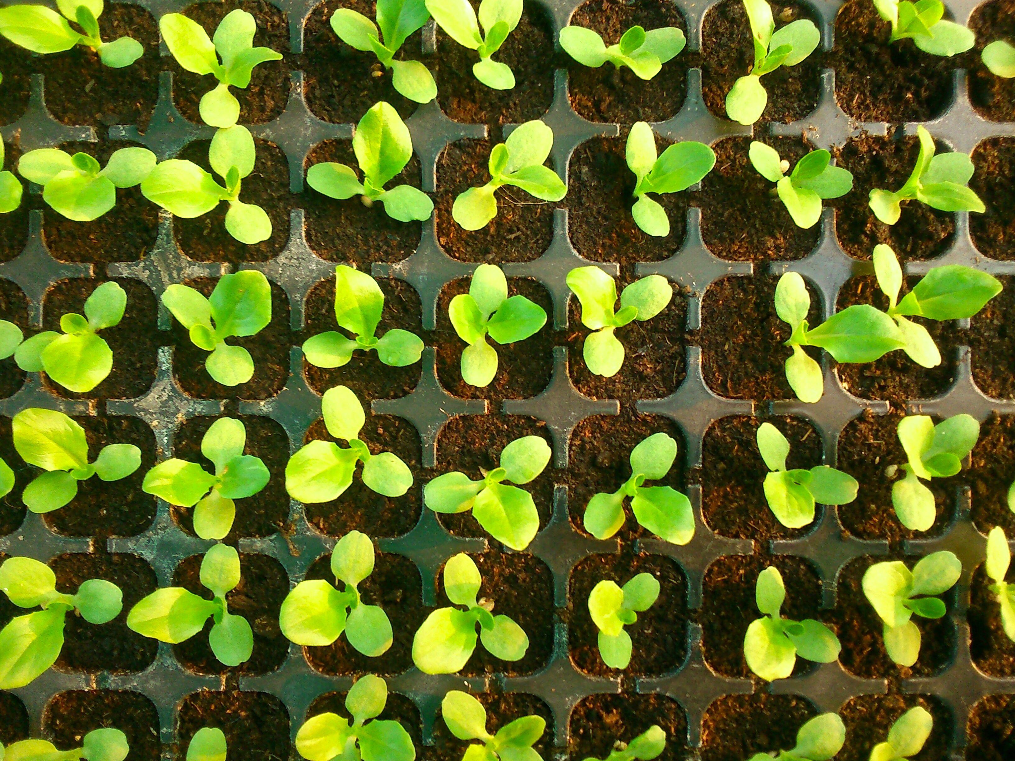 7 Plantas Faciles De Cultivar Por Semilla