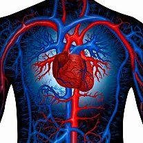 imagen de vena arteria y capilar