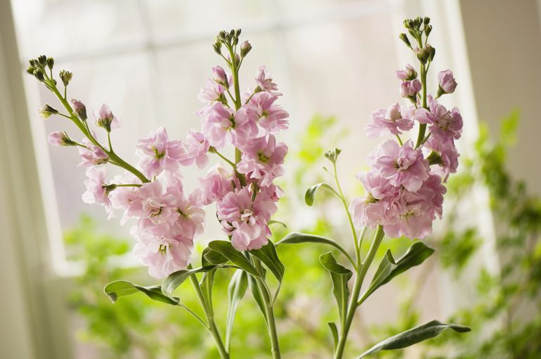 Flores para boda en verano - Alheli.